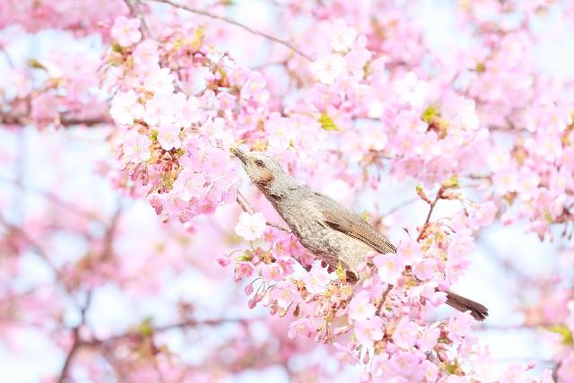 「桜 合格」の画像検索結果